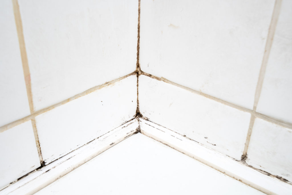 Mould growing in the grout of a tiled wall