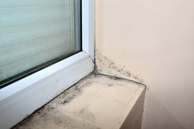 Mould and damp