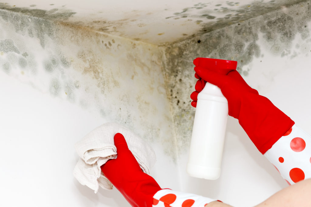 Person in red gloves cleaning mold from a corner
